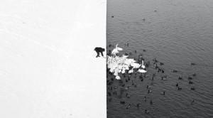 Marcin Ryczek - A Man Feeding Swans in the Snow